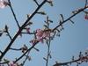 Tegainbanuma_20080322_32