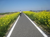 Cycling_20090411_2
