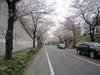Cycling_20100403